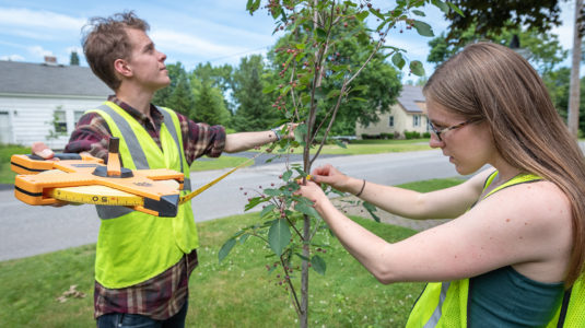 HERO Fellows Benjamin Ryan and Shannan Reault measure a tree in Leominster.