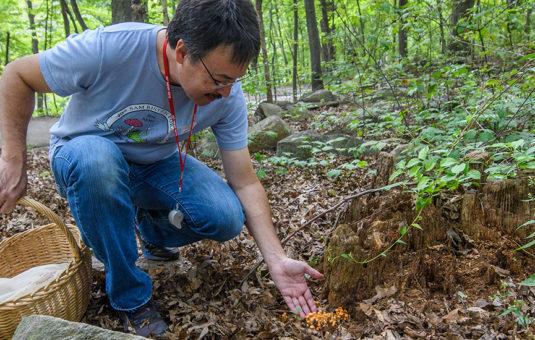 David Hibbett in woods picking fungi