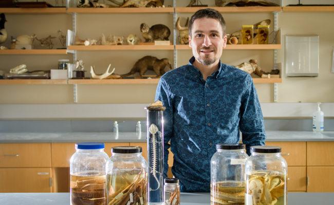 Professor Philip Bergmann in lab with reptile skeltons