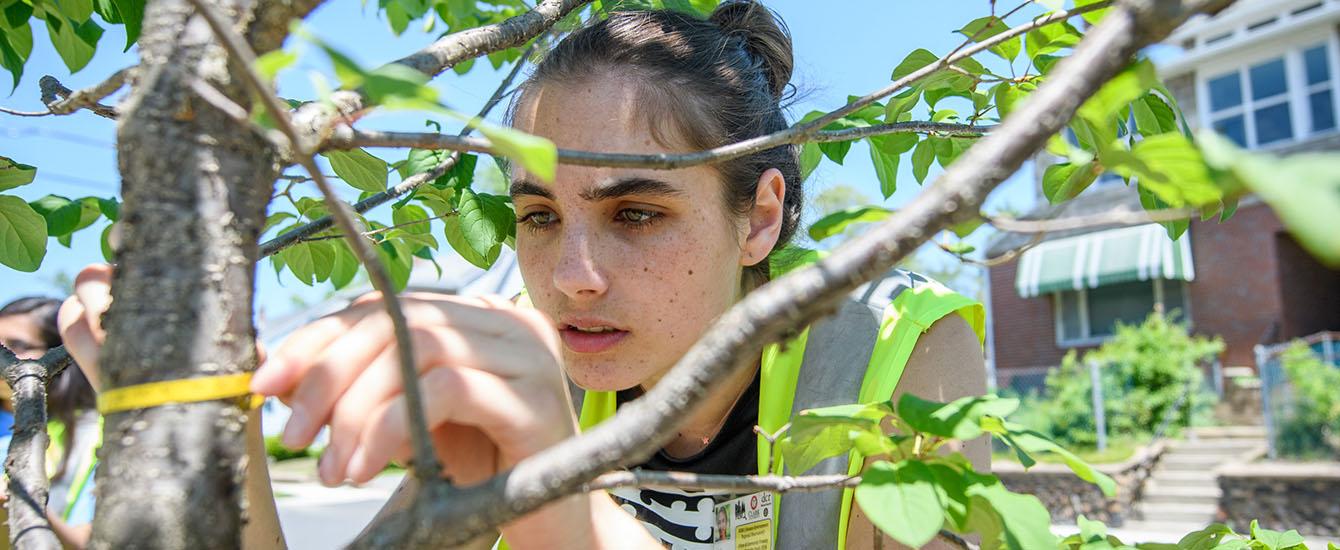 Student measures tree