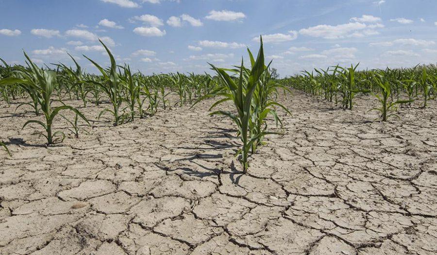 drought soild with corn