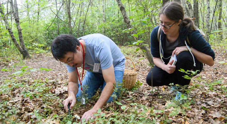 Ecotarium Professor Foray picking mushrooms