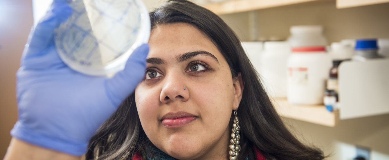 Student looking at cell sample on plate
