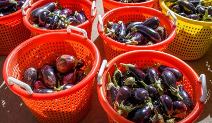 Baskets full of eggplant