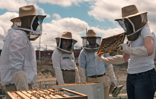 Students standing around bee hive with nets on their heads