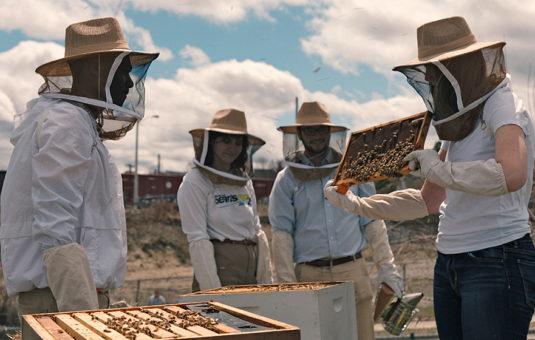 people in bee uniforms