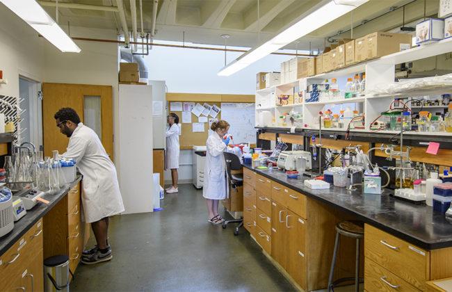 lab setting
