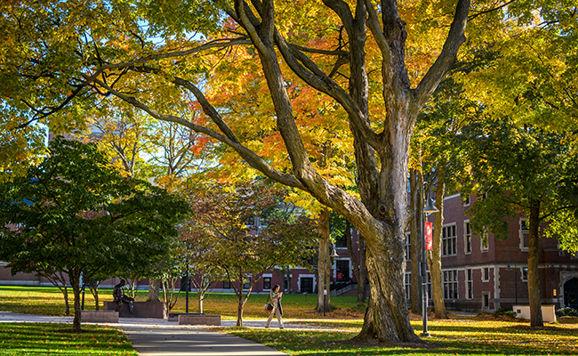 Photos of Fall Trees on the Green