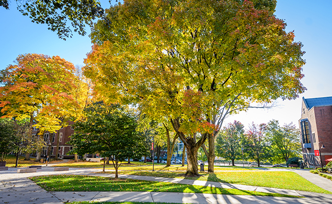 Photo of vibrant trees on the Green