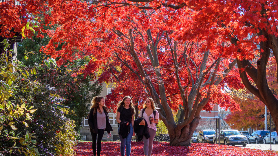 red fall leaves on tree with students wakinb by it