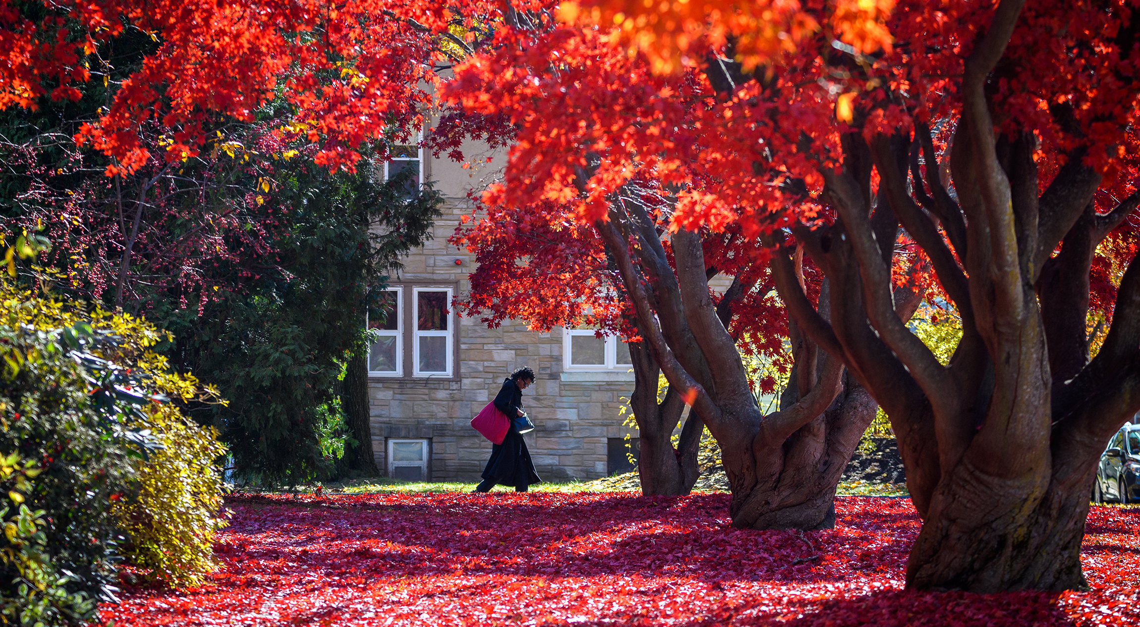 Woman walking under trees with fall foliage