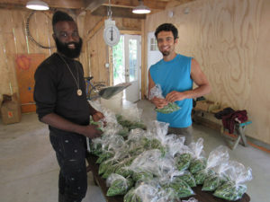 Jonah Vitale-Wolff (right) and a visitor to Soul Fire Farm prepare produce for market.