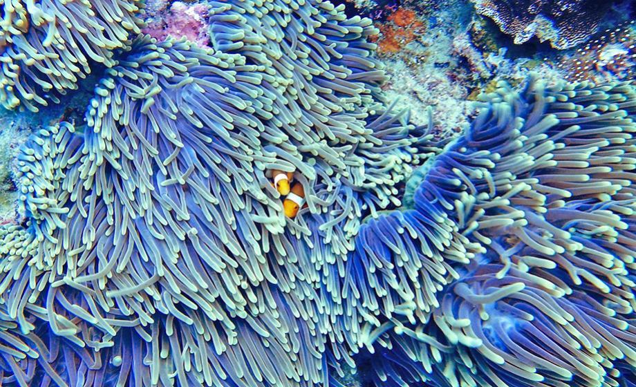 coral-reef-clark-university