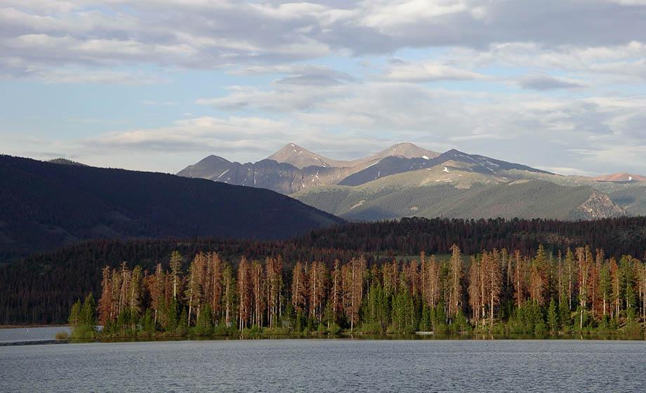Landscape of dead trees next to water, with mountains in background