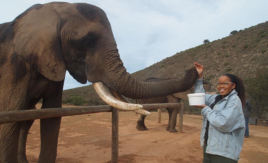 undergraduate Marissa Callender petting elephant