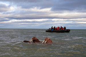 Meghan Kelly oversees Zodiac excursions to view Arctic wildlife.