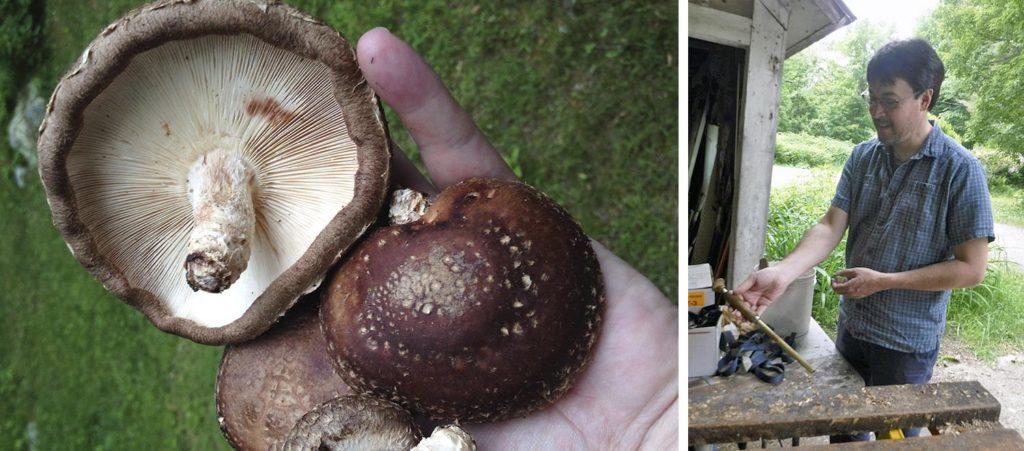 Shiitake mushrooms at left; David Hibbett, Clark University professor of biology, at right