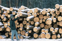 Timber harvesting removes more carbon from US forests each year than any other process. Courtesy of USDA Forest Service.