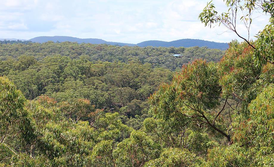 Forest in Australia