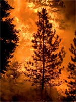 Wildfires consume millions of hectares of US forest each year releasing a large amount of carbon to the atmosphere. Courtesy of Kari Greer/U.S. Forest Service)
