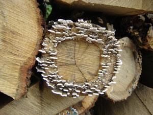 mushroom-forming fungi