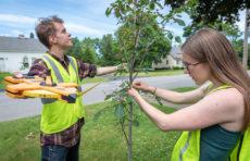 HERO Fellows Benjamin Ryan and Shannan Reault measure a tree in Leominster.