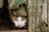 Stray cat hiding