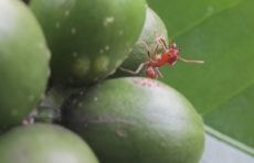Ant research by Professor Kathy Mathis and st