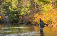 Quincy Milton III fly fishes on the Swift River in Belchertown, Mass.
