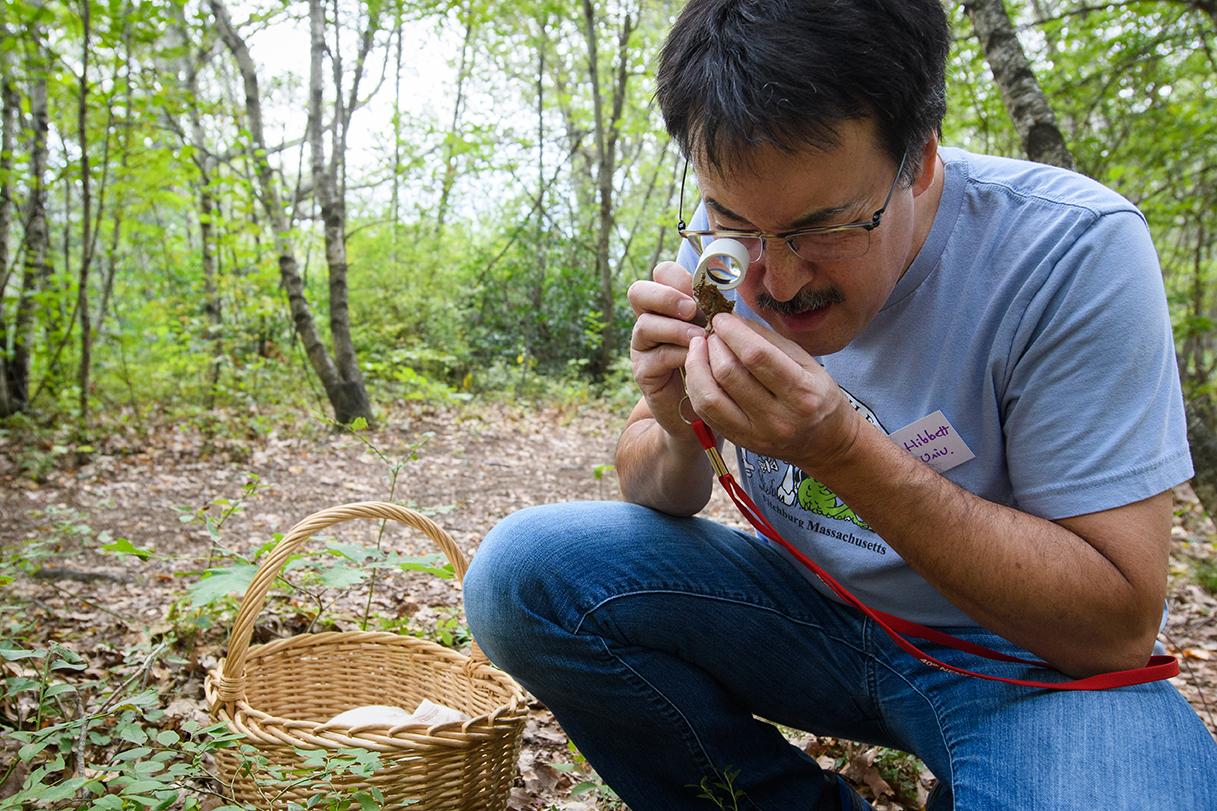 david hibbett examines mushroom