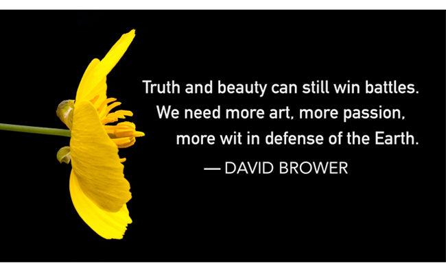 Bush poppy wildflower with quote